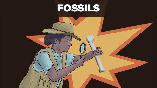 Fossils-thumb